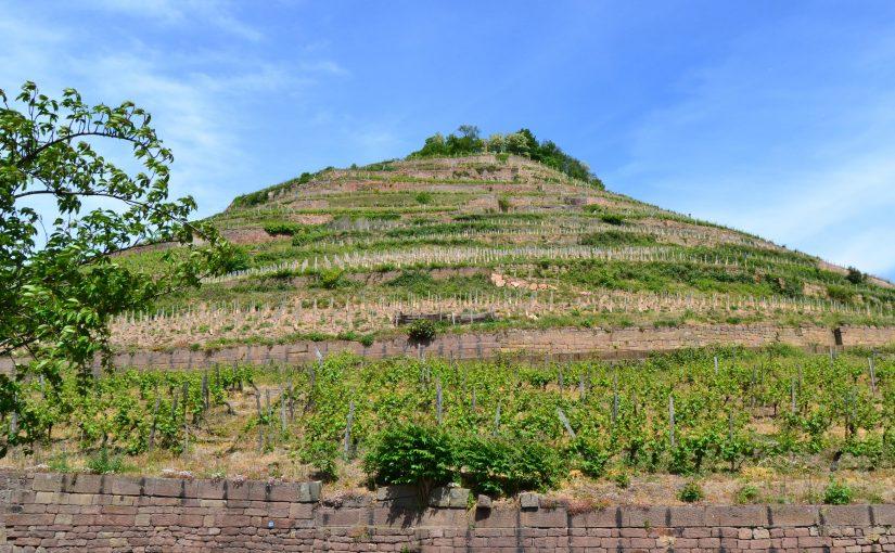 Les 51 Grands Crus d'Alsace : autant de terroirs à découvrir