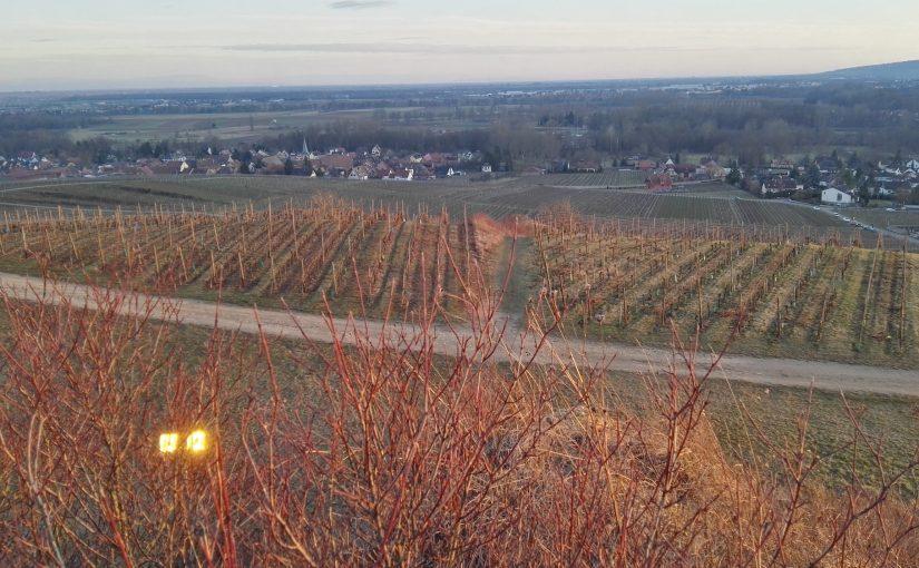 Domaine Lissner : des vins d'Est éthiques